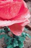 Foto de la flor que tienen descensos foto de archivo