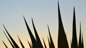 Foto de la hierba de Abstaract Fotografía de archivo