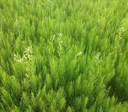 Foto de la hierba del campo Foto de archivo libre de regalías