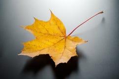Foto de la hoja del otoño. fotos de archivo