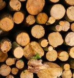 Foto de la leña del Woodpile Foto de archivo