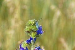 Foto de la macro del insecto del verano Imagenes de archivo