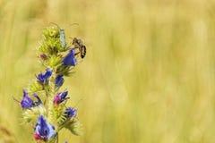 Foto de la macro del insecto del verano Fotografía de archivo libre de regalías