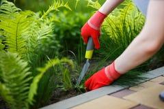 Foto de la mano con guantes de la mujer que sostiene la mala hierba y la herramienta que la quitan de suelo Imágenes de archivo libres de regalías