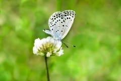 Foto de la mariposa que chupa la flor con el bokeh delicioso Fotos de archivo