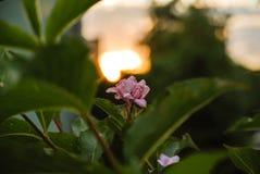 Foto de la naturaleza y de la puesta del sol Fotos de archivo