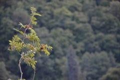 Foto de la ramita en una montaña Fotos de archivo