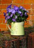 Foto de las flores de la campánula Fotos de archivo libres de regalías