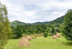 Foto de las pilas del heno en campos verdes Imágenes de archivo libres de regalías