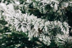 Foto de las ramas del abeto con nieve imagenes de archivo
