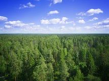 Foto de los árboles de pino del paisaje aéreo del abejón, con el cielo y las nubes Foto de archivo libre de regalías