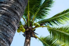 Foto de palmas y del cielo azul cocos El concepto de viaje tropical Foco selectivo fotografía de archivo