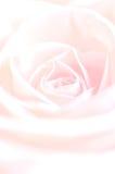 Foto de Rose With Water Drops hermosa Imágenes de archivo libres de regalías