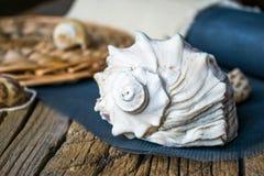 Foto de shell do mar Imagem de Stock Royalty Free