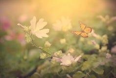 Foto de um fundo floral da beleza com borboleta Foto de Stock Royalty Free