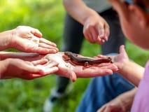 Foto de um newt pequeno cercado por muitas mãos fotos de stock
