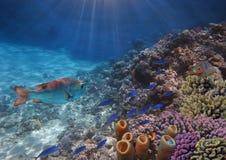 Foto de um peixe tropical em um recife de corais Foto de Stock Royalty Free