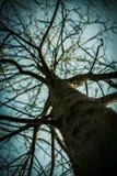Foto de uma árvore sem folhas Fotografia de Stock Royalty Free