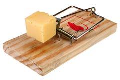 Foto de uma armadilha do rato com queijo como a isca, conceito Imagens de Stock Royalty Free