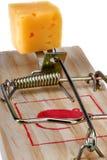 Foto de uma armadilha do rato com queijo como a isca, conceito Imagem de Stock