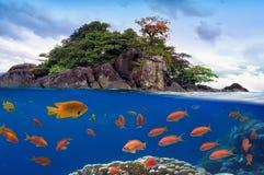 Foto de uma colônia coral em uma parte superior do recife Fotografia de Stock Royalty Free
