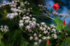 Foto de uma flor branca Upclose imagem de stock royalty free