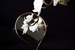 Foto de uma orquídea branca imagens de stock royalty free