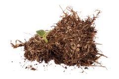 Foto de uma planta que cresce em um monte da argila isolado em um fundo branco imagem de stock