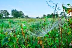 Foto de uma Web em um prado Imagem de Stock