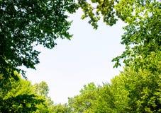 Foto de un hueco grande entre árboles en un bosque verde Imagenes de archivo