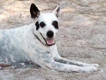 Foto de un perro joven en la playa fotos de archivo