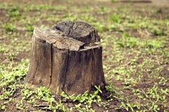 Foto de un tocón alrededor del cual la hierba verde crece foto de archivo libre de regalías