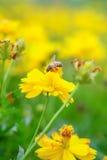 Foto de una abeja hermosa en sorprender de la flor y flor Foto de archivo