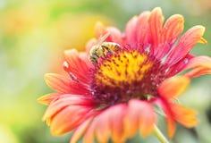 Foto de una abeja hermosa y de flores al día soleado Imagen de archivo