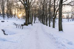 Foto de una calzada vacía en parque en callejón en Sunny Winter Evening fotos de archivo