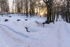 Foto de una calzada vacía en parque en callejón en Sunny Winter Evening imagenes de archivo