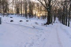 Foto de una calzada vacía en parque en callejón en Sunny Winter Evening foto de archivo libre de regalías