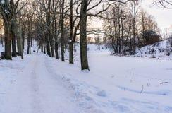 Foto de una calzada vacía en parque en callejón en Sunny Winter Evening imágenes de archivo libres de regalías