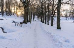 Foto de una calzada vacía en parque en callejón en Sunny Winter Evening fotos de archivo libres de regalías