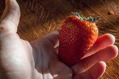 Foto de una mano que sostiene una fresa Fotos de archivo libres de regalías