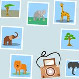 Foto degli animali tropicali illustrazione di stock