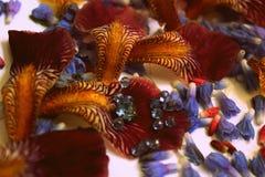 Foto dei petali del fiore, perle, gioielli, braccialetto, Immagini Stock Libere da Diritti