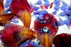 Foto dei petali del fiore, perle, gioielli, braccialetto, Fotografie Stock Libere da Diritti