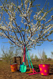 Rastrelli e vanga di Colorfull Fotografia Stock Libera da Diritti