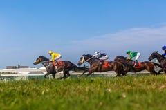 Foto del ángulo de la hierba de la acción de la carrera de caballos Foto de archivo