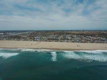 Foto del abejón de la costa de California Imagenes de archivo