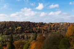 Foto del abejón sobre un bosque hermoso en otoño con el árbol colorido fotografía de archivo