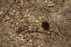 foto del abejorro en el pavimento Imagen de archivo libre de regalías