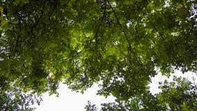 Foto del baldacchino con luce solare che splende tramite le foglie Fotografia Stock