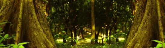 Foto del bosque Fotos de archivo